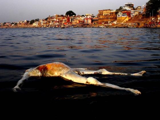 india-photos-36-560x420