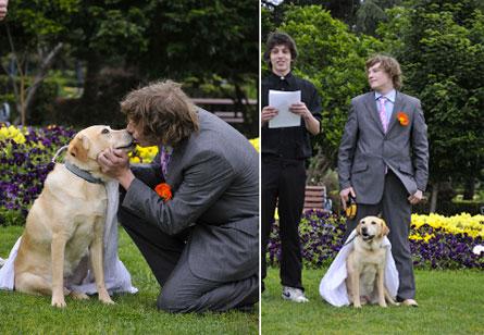 weddingsdog